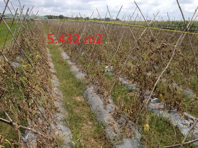 Bán 5432 m2 đất vườn trang trại mặt tiền đường nhựa xã Thái Mỹ Củ Chi giá 220 ngàn/1m2
