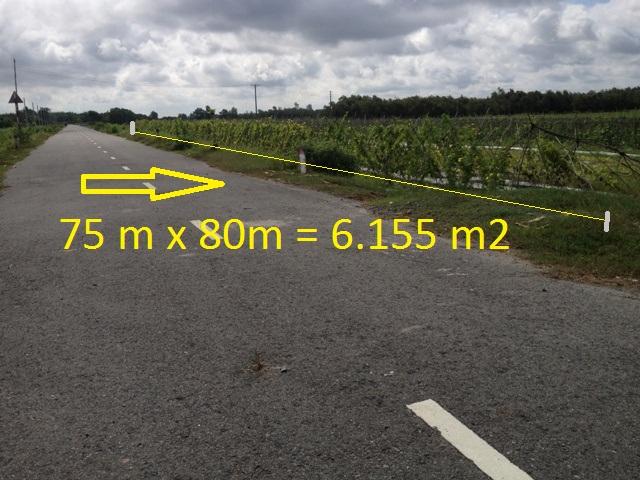 Bán 6.155 m2 đất trang trại nuôi; trồng thủy sản mặt tiền đường nhựa xã Thái Mỹ Củ Chi giá 120 ngàn/1m2