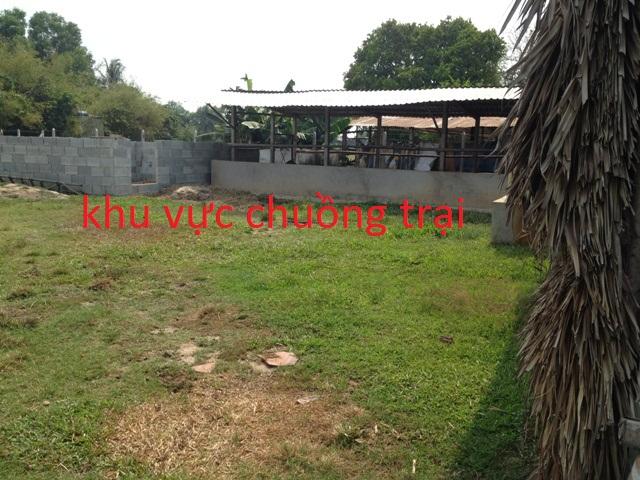 Bán  1.957m2 đất nhà vườn trang trại xã Phước Thạnh Củ Chi giá 620 triệu.