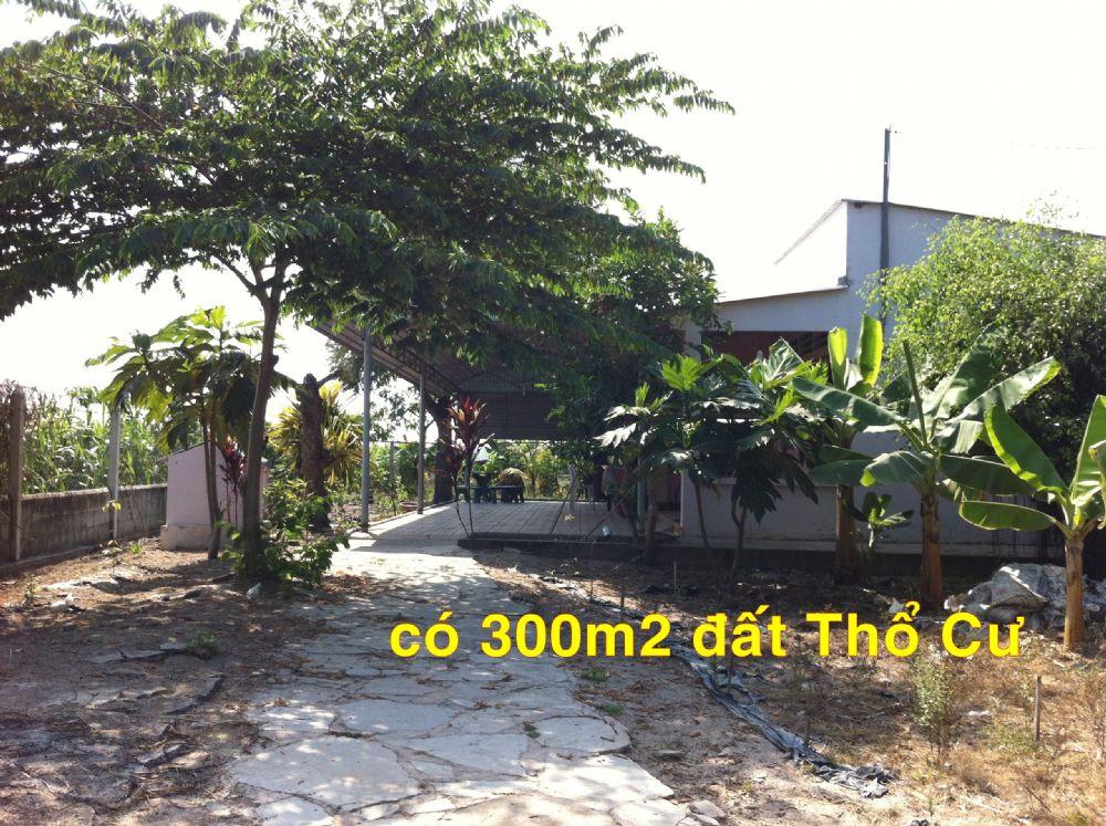 Cần bán gấp đất giá rẻ Củ Chi-TP.Hồ Chí Minh ,(2.800m2), 500tr,0974 924 839 (Tuyết Lành )