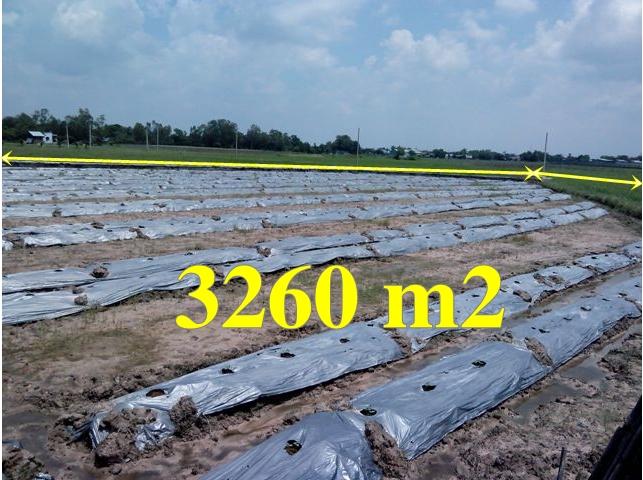 Bán đất vườn Củ Chi 3260 m2 giá 300 triệu