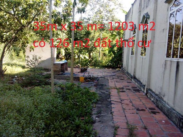 Bán 1203m2 nhà đất thổ cư xã Tân Phú Trung Củ Chi giá rẻ 900tr